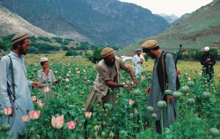 Opium harvesting in the Pech Valley