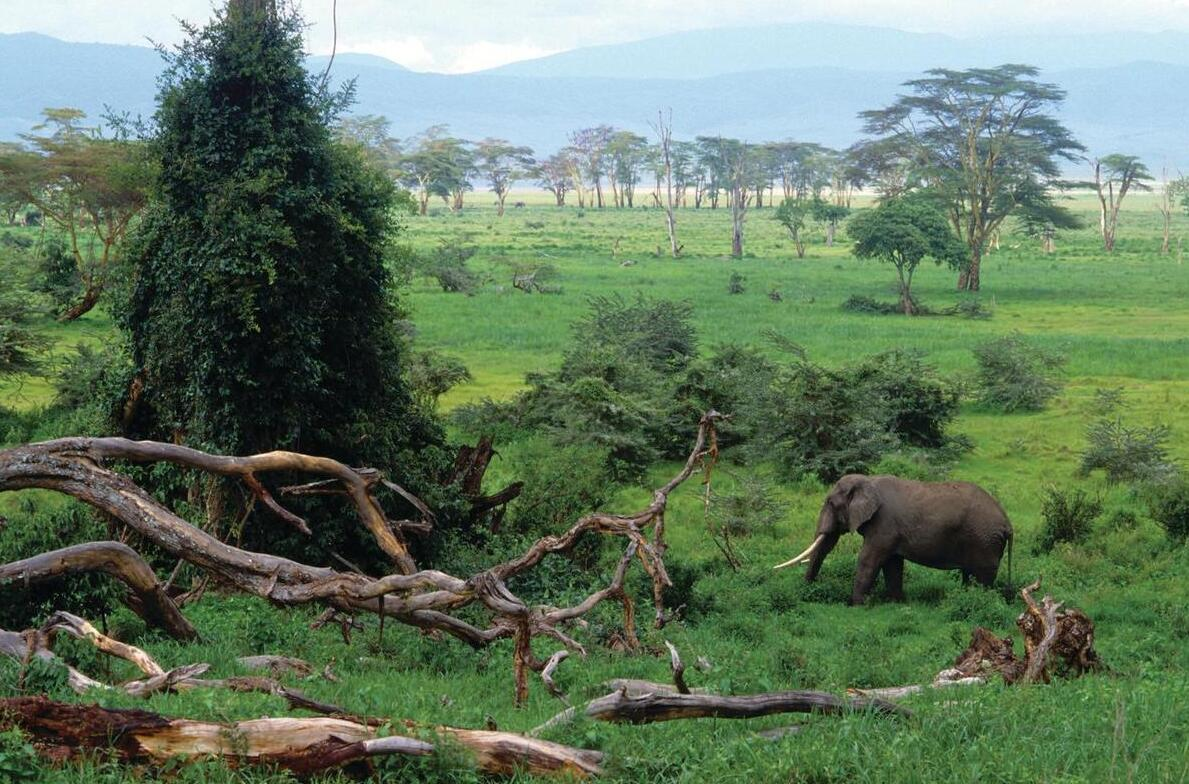 Ngorongoro National Park