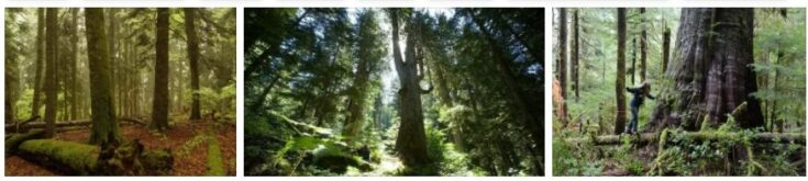Primeval Forests of Komi