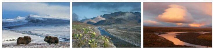 Wrangel Island Nature Reserve